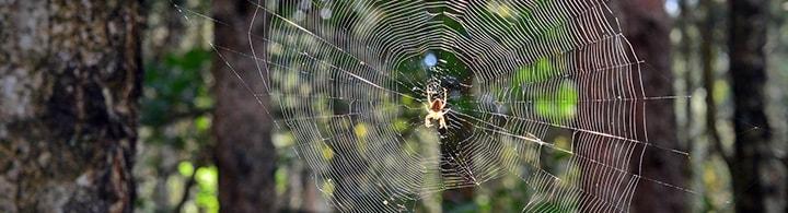 Spinnen Beitragsbild