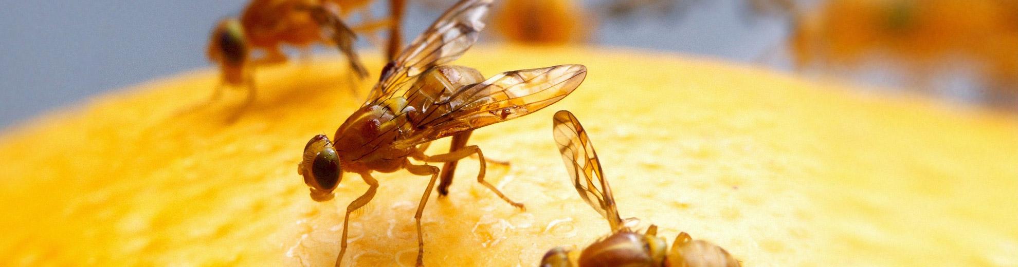 Fliegen in der wohnung trendy angebot with fliegen in der for Was hilft gegen fliegen in der wohnung