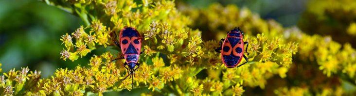 Käfer im Sommer