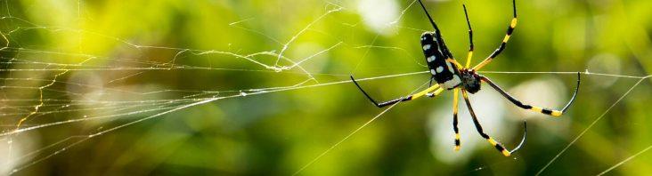 Mittel gegen Spinnen im Haus