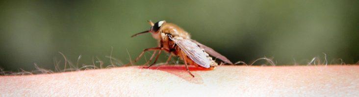 Mittel gegen Insektenstiche