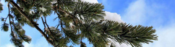 Insekten im Weihnachtsbaum