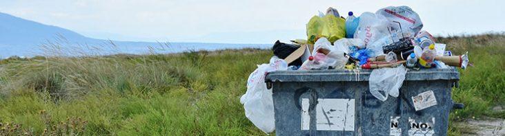 Müll lockt Schädlinge an